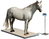 scale for weighing horses