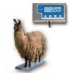 brecknell ps1000 livestock scale with built in ramps